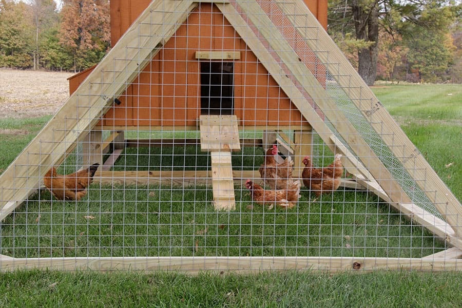 chickens in the triangle run